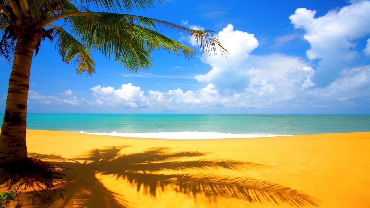 Графические дополнения.  О нас и контактные данные.  Желтый песок и пальмы.