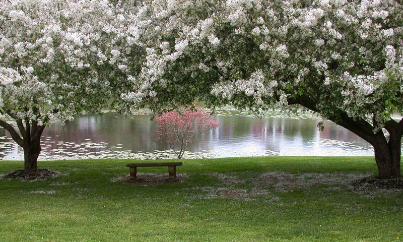 Весна без конца и без краю... Desktopwallpapers.org.ua-11093