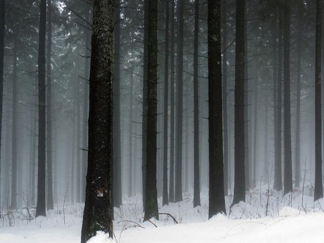 Зима зимой 10