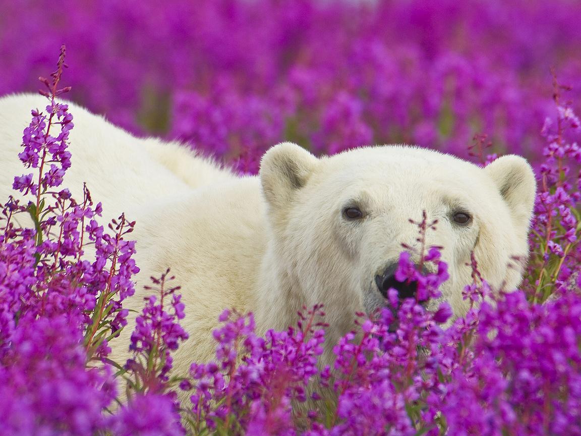 Медведь с цветами картинки 3