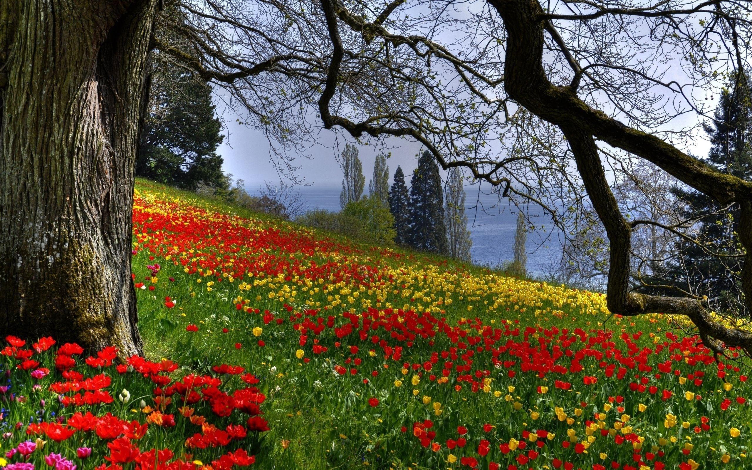Картинки цветы и природа