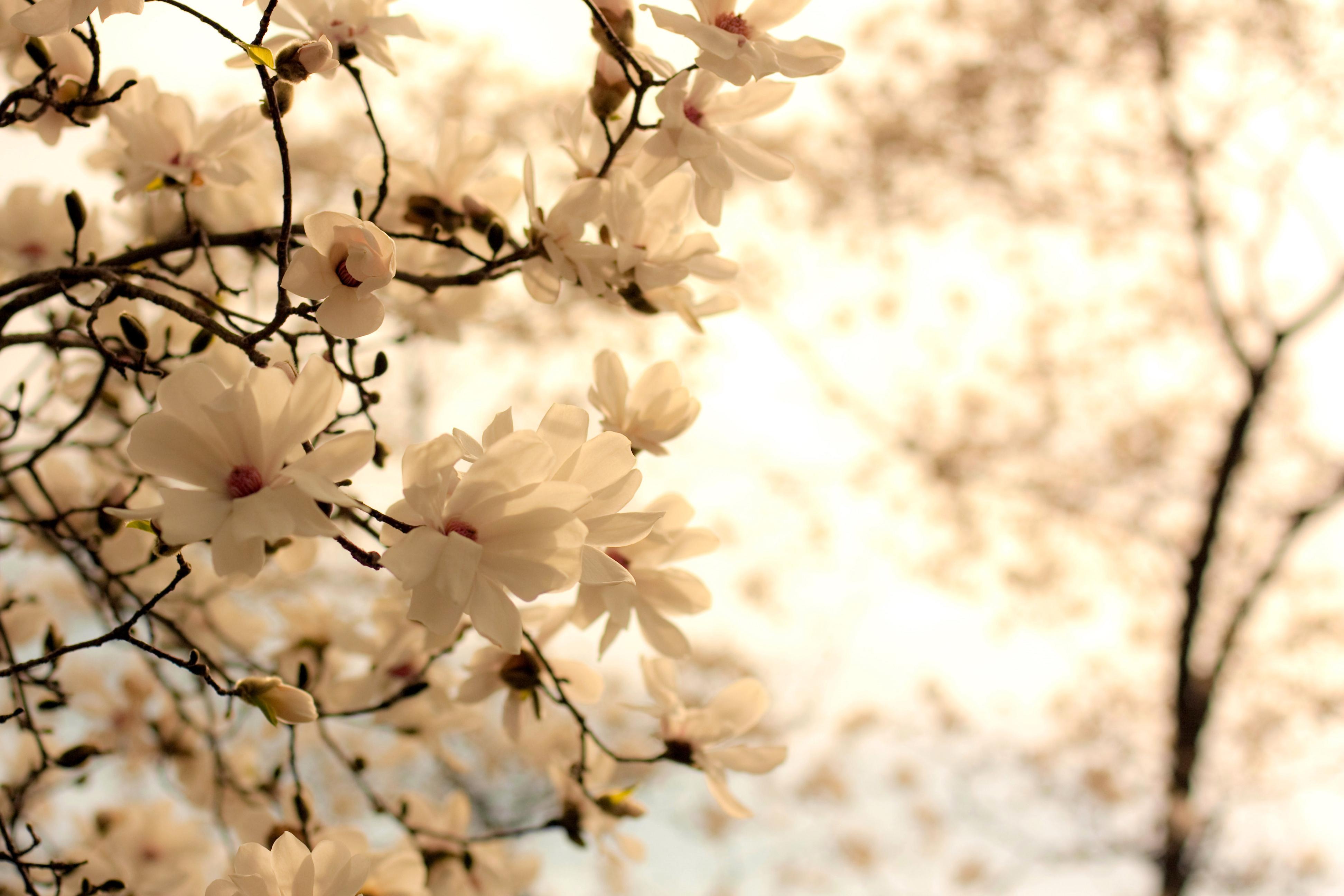 Фон цветов