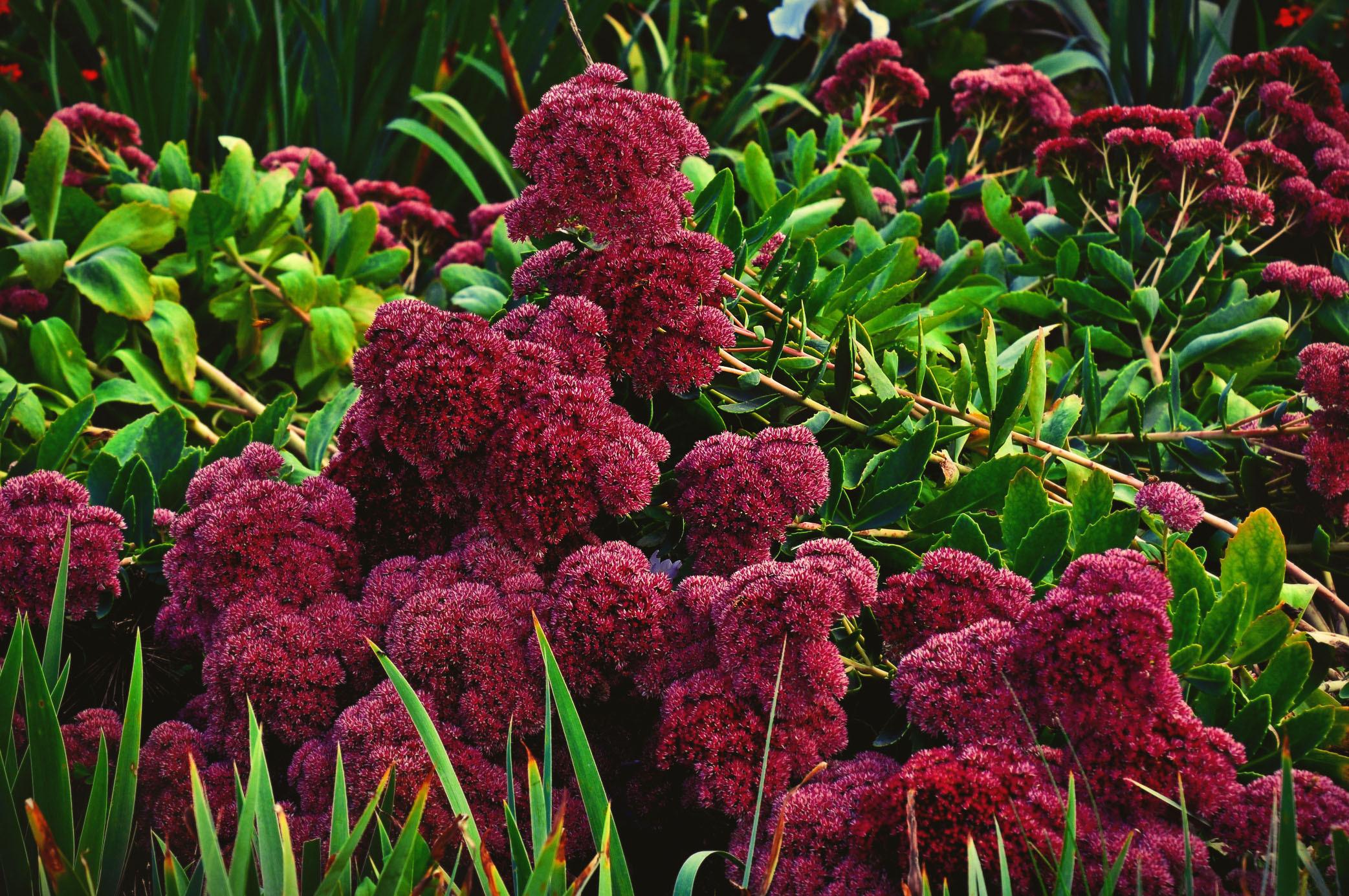 Комнатные растения китайский вьюн