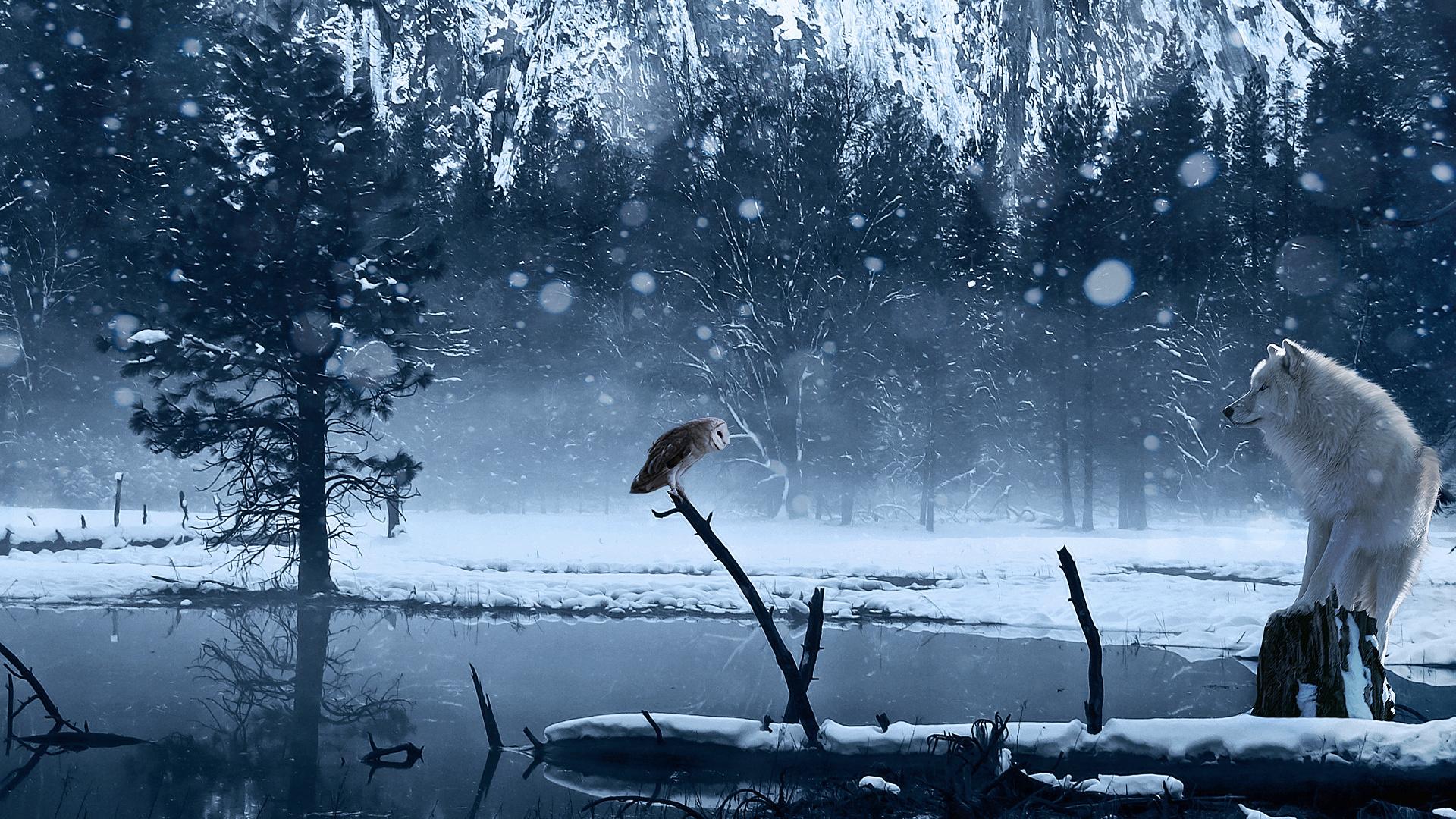 Обои волк зима снег озеро арт сова