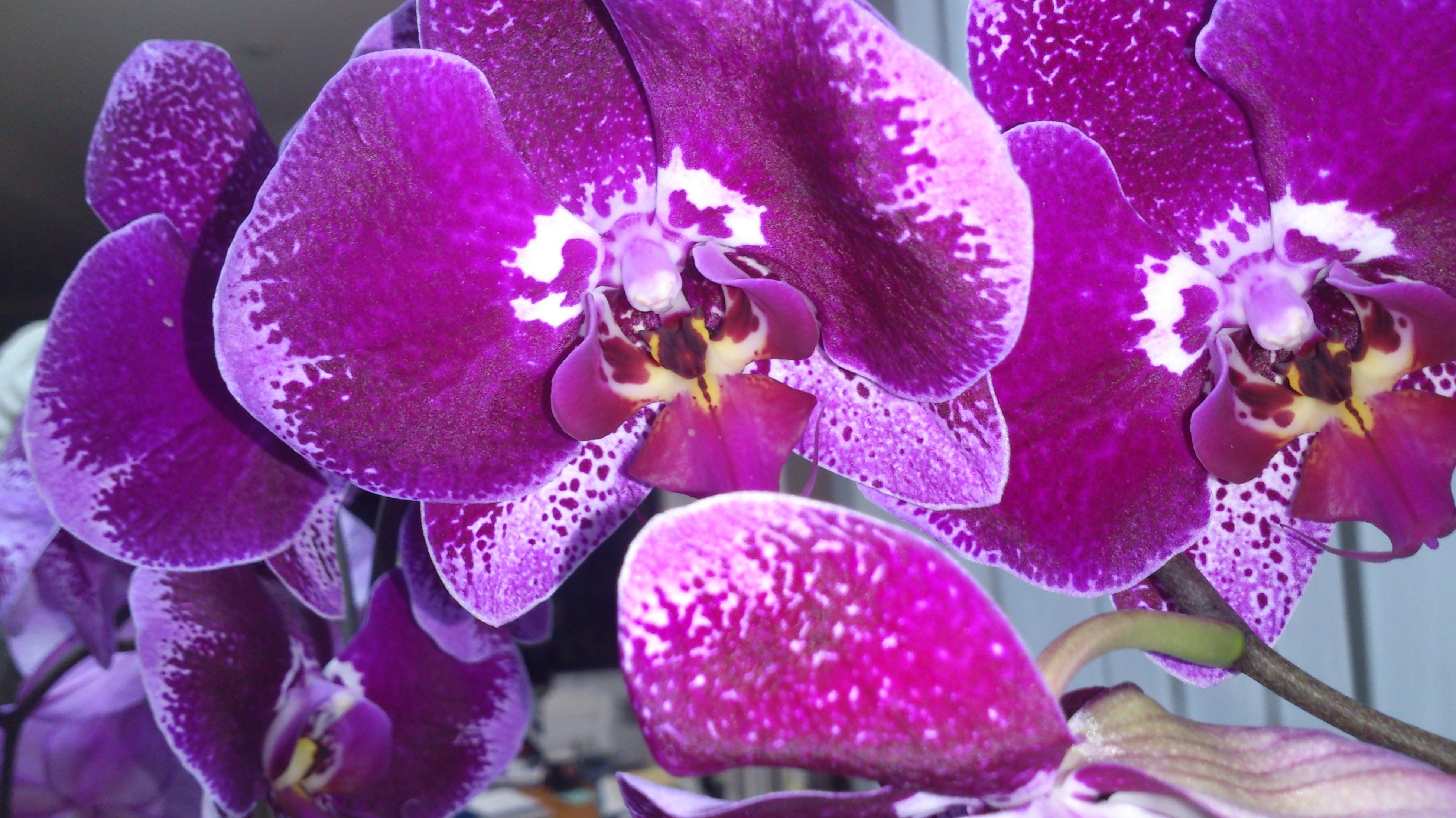 Орхидеи широкоформатные обои на рабочий стол