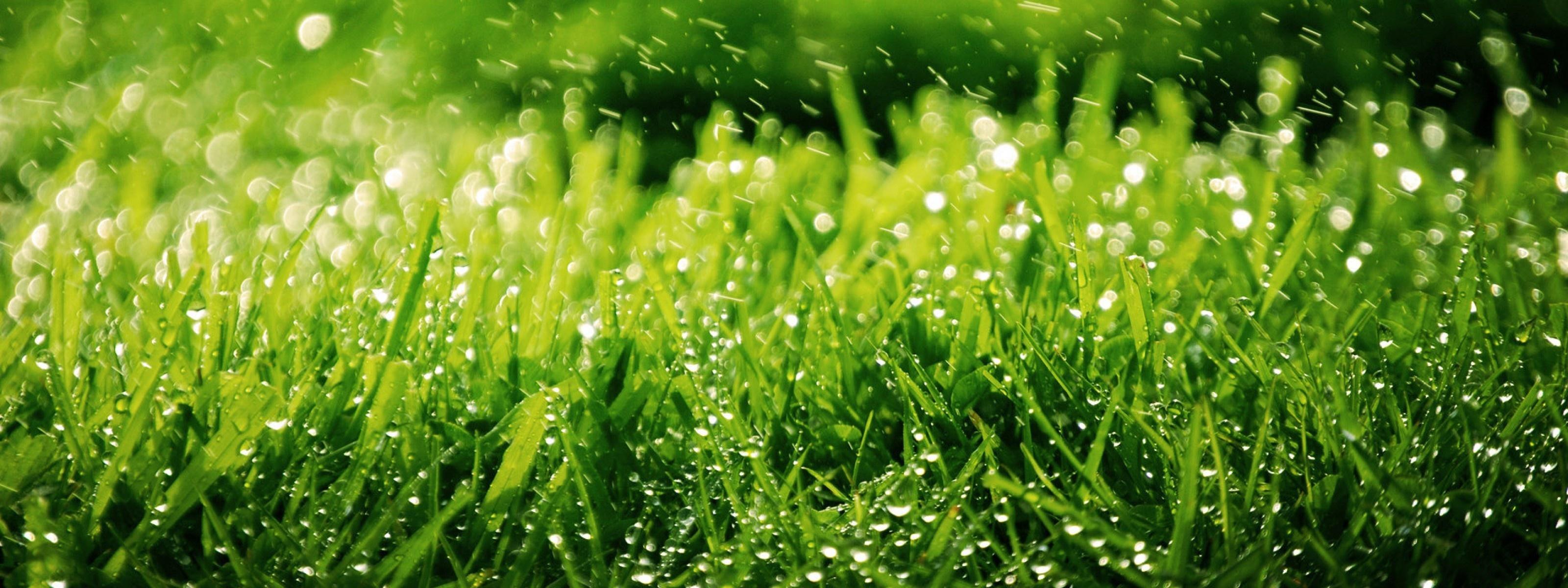 Фон зелень деревья