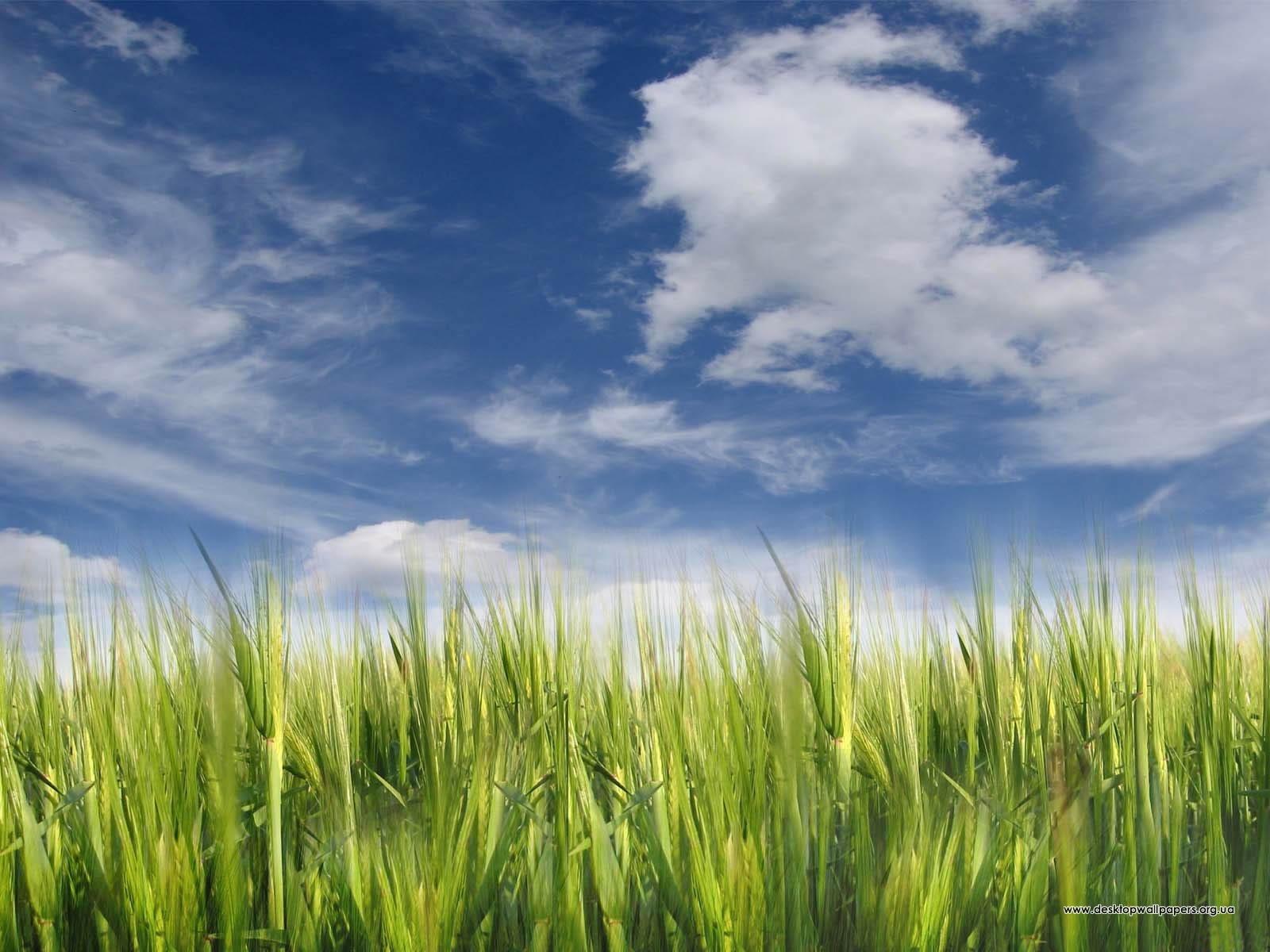 Шпалери небо і трава переглянути