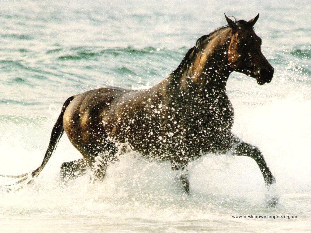 Шпалери кінь переглянути зображення