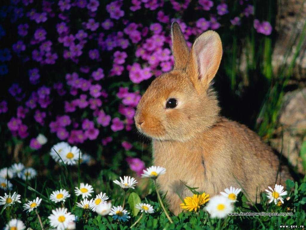 Шпалери кролик переглянути