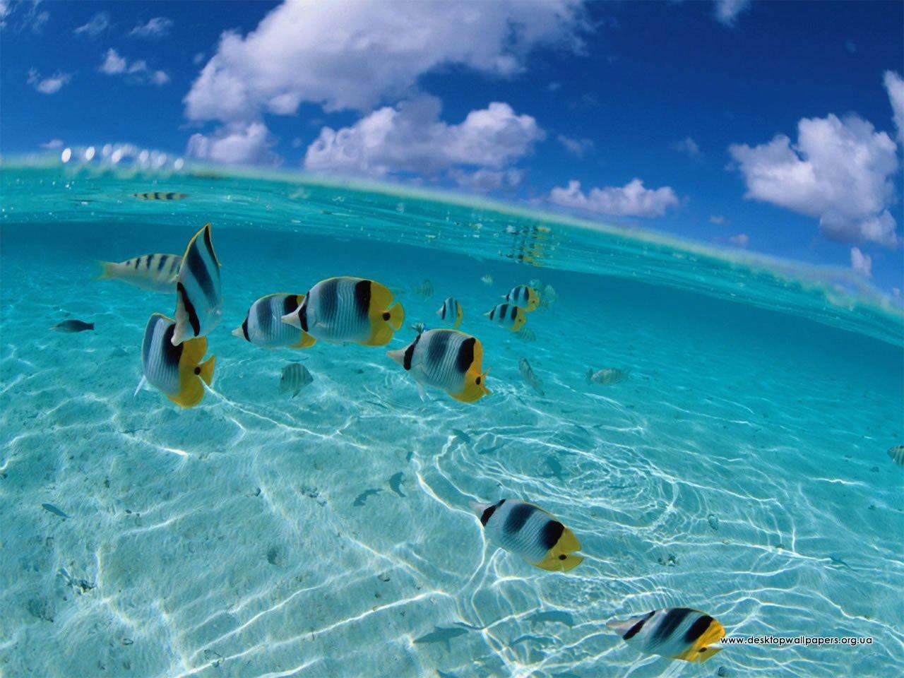 Шпалери риби переглянути зображення