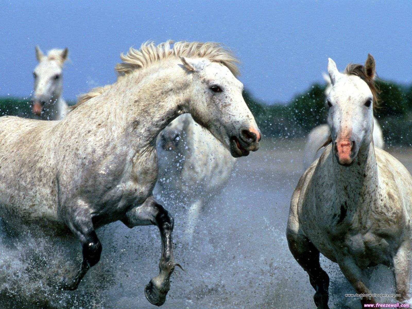 Шпалери / тварини / коні