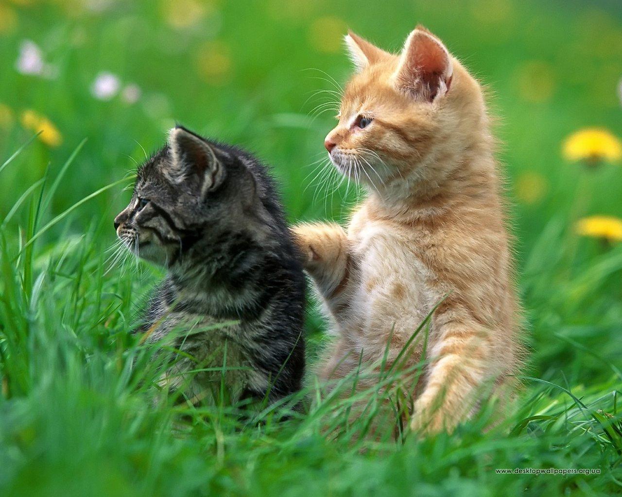 Шпалери кошенята переглянути