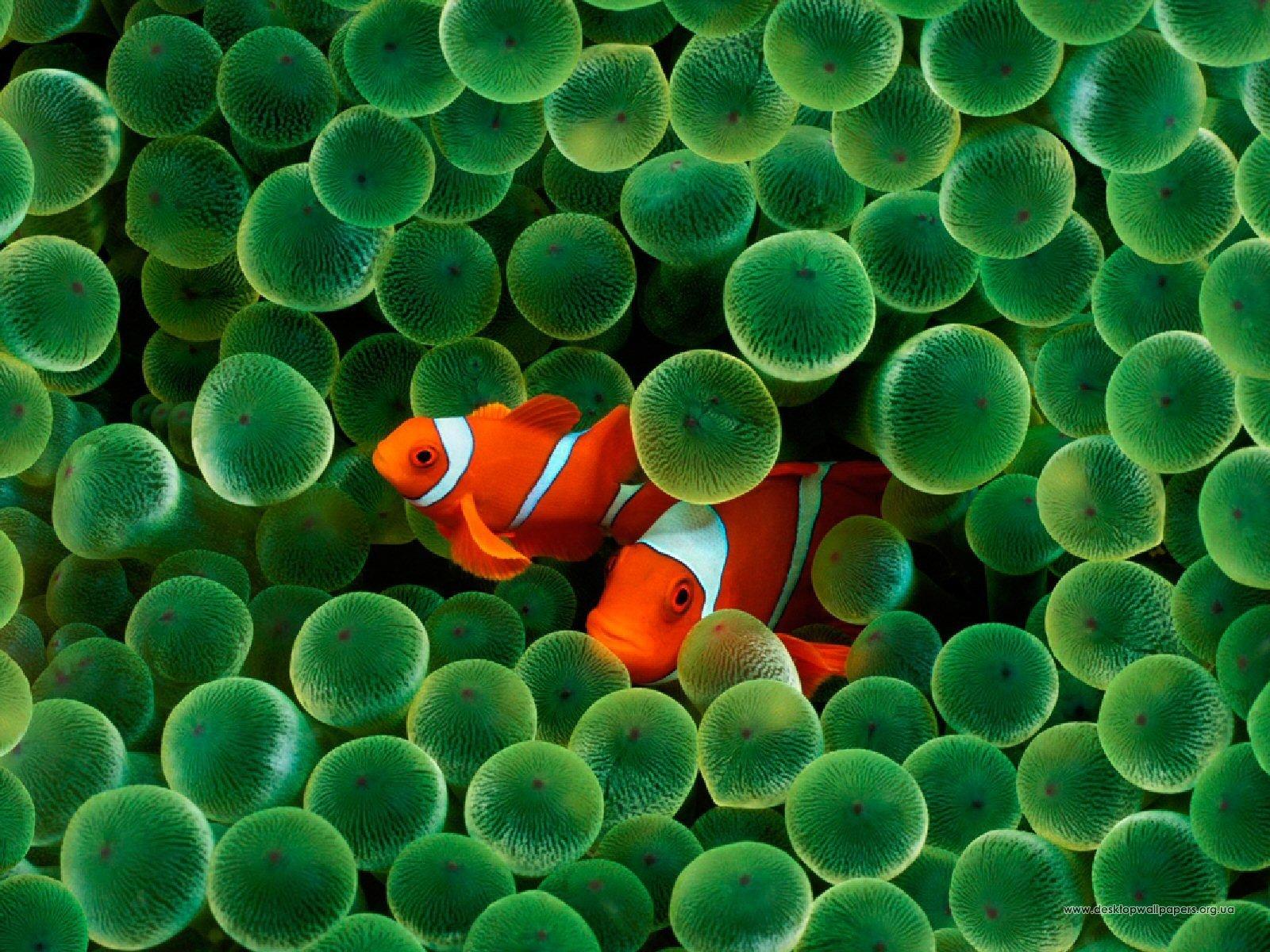 Шпалери тварини риби