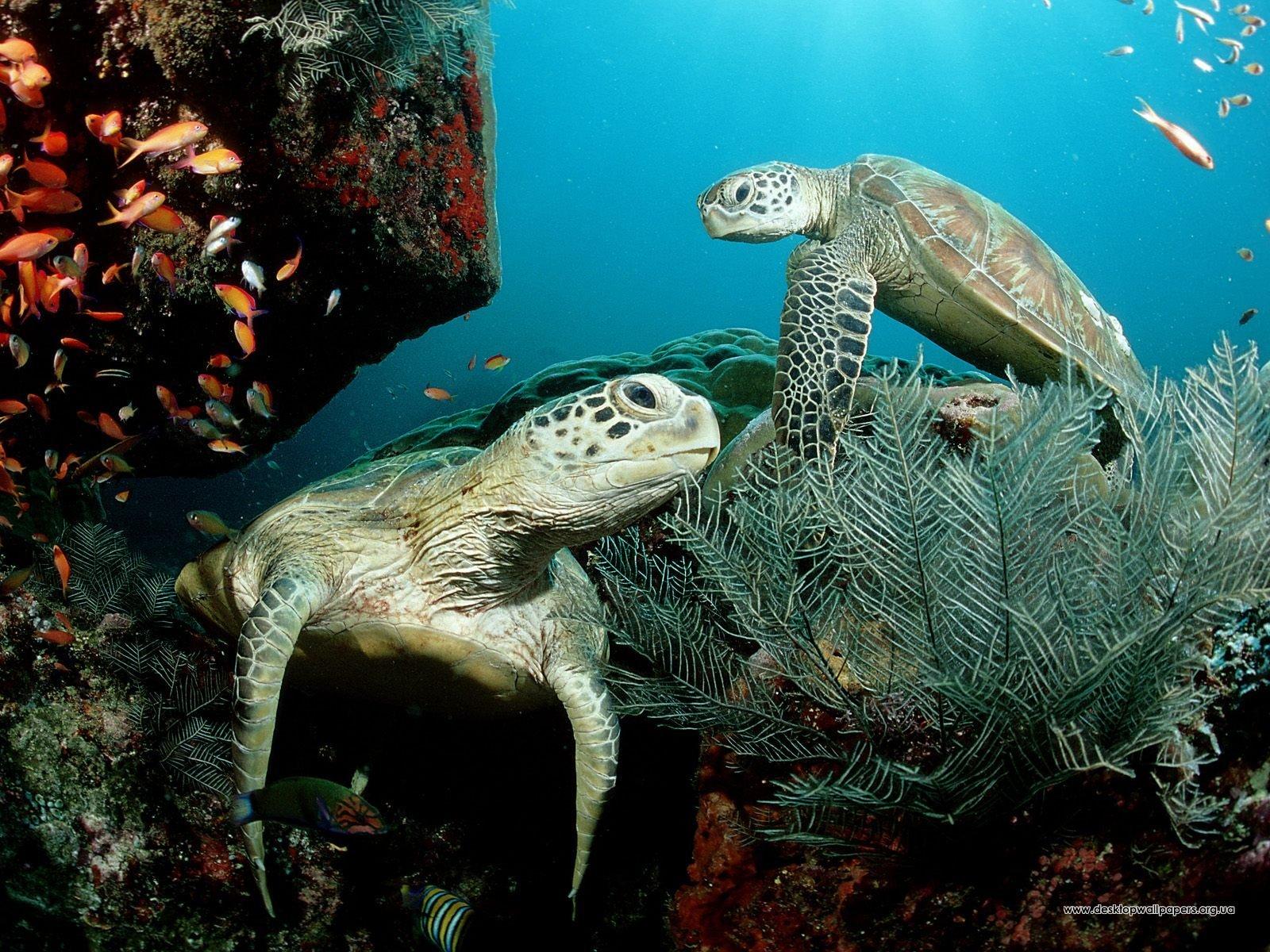 Шпалери тварини зелені морські