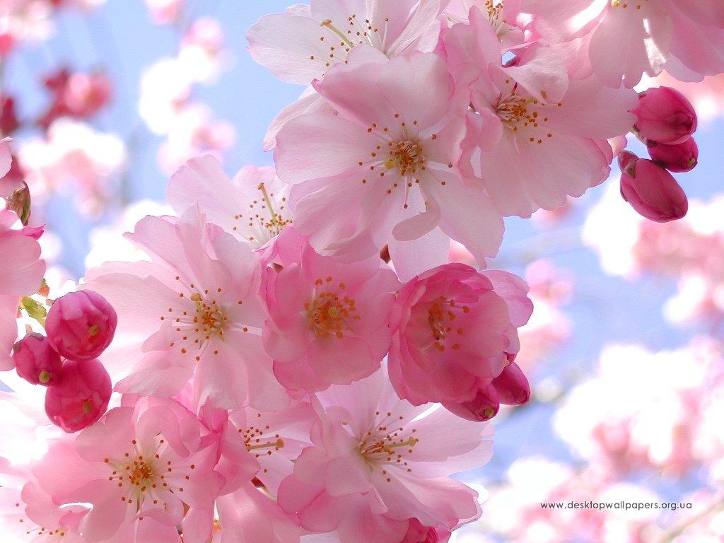 Шпалери spring feeling переглянути