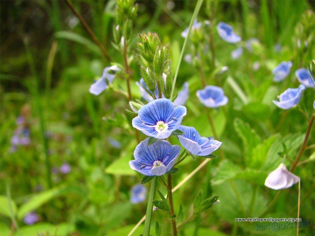 Шпалери квіти переглянути зображення