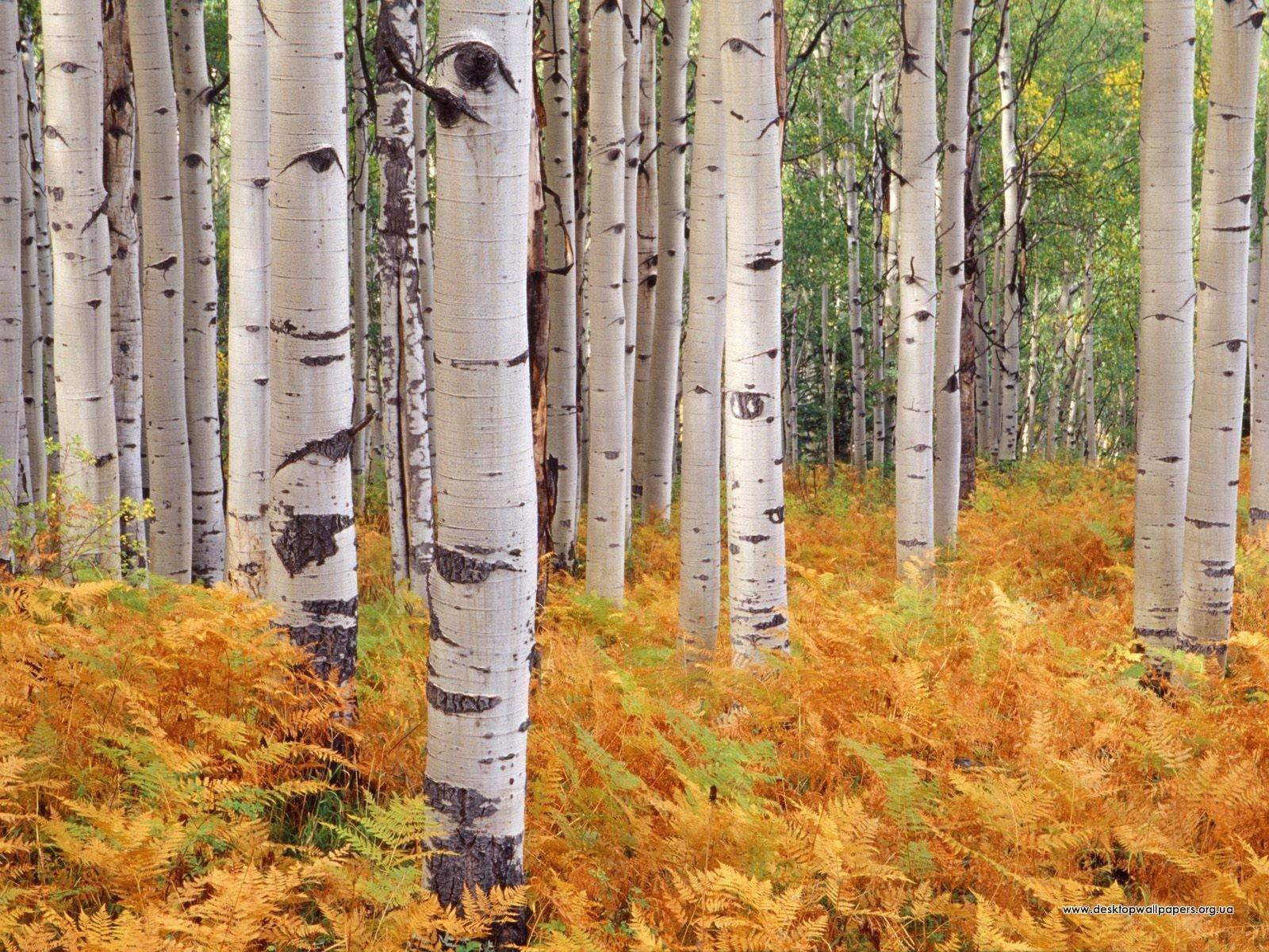 Шпалери осінній ліс (переглянути