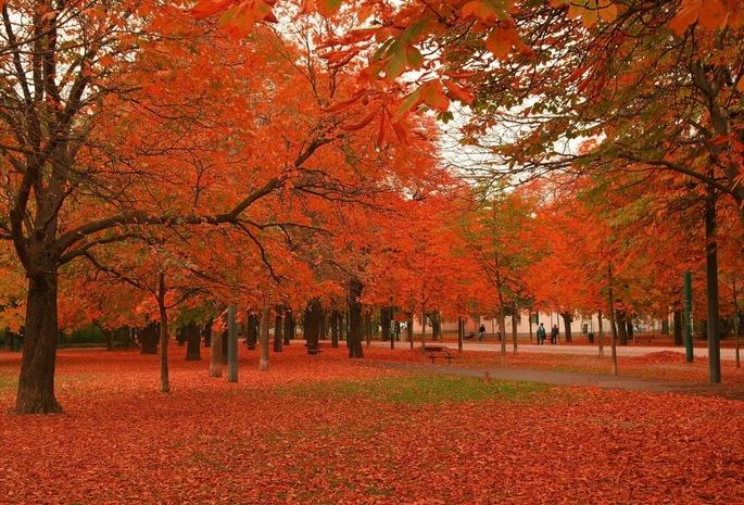 Стола картинки осень на рабочий стол