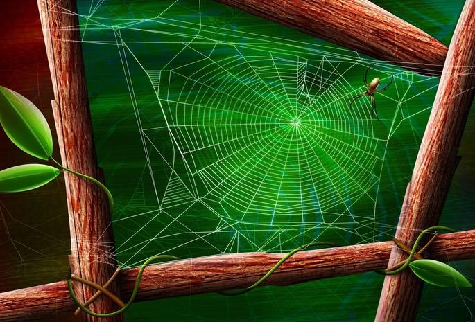Ветки дерева квадрат зелень паутина