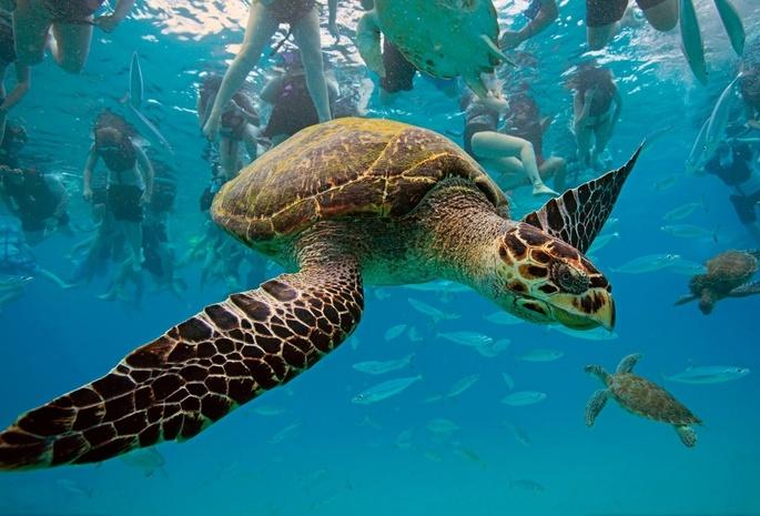 Черепаха стаи животные океан