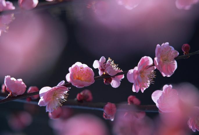 Цветы цветение 80 розовый 131 цветы