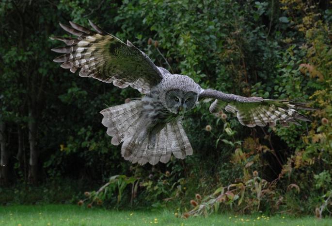 Птица полёт сова перья крылья