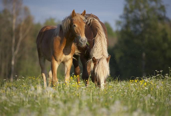 Картинки про природу летом с животными