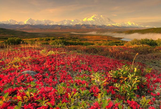 Обои пейзаж горы снег цветы небо