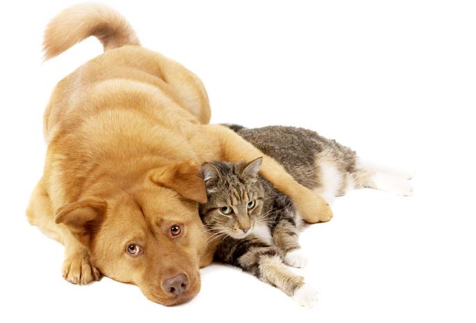Друзья рыжий собака пёс кошка кот