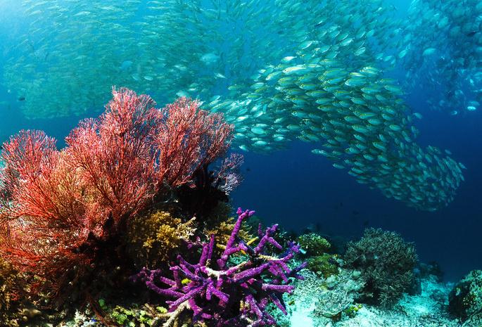 Рыбы море косяк подводный мир