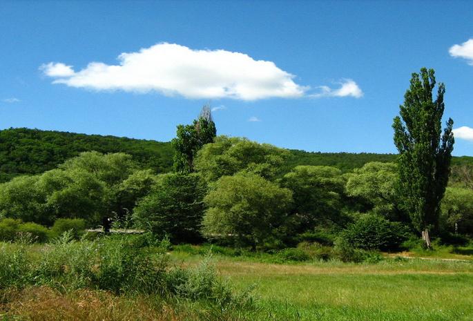 Природа лес голубое небо