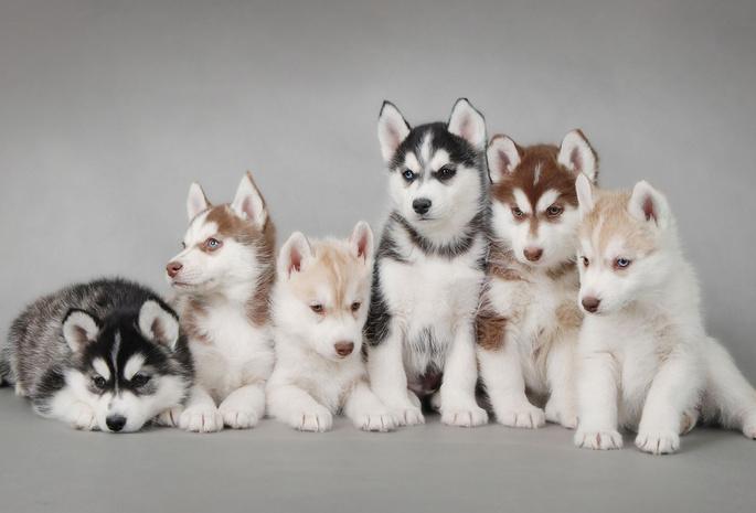 картинки для рабочего стола собачки: