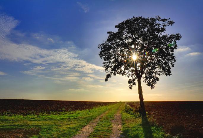 Природа дорога дерево поле