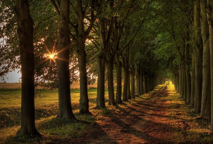 Обои дорога свет пейзаж деревья для