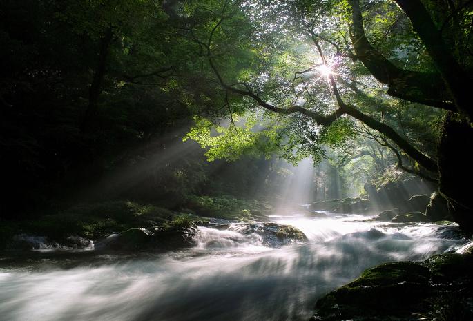 Деревья утро свет природа лес лучи