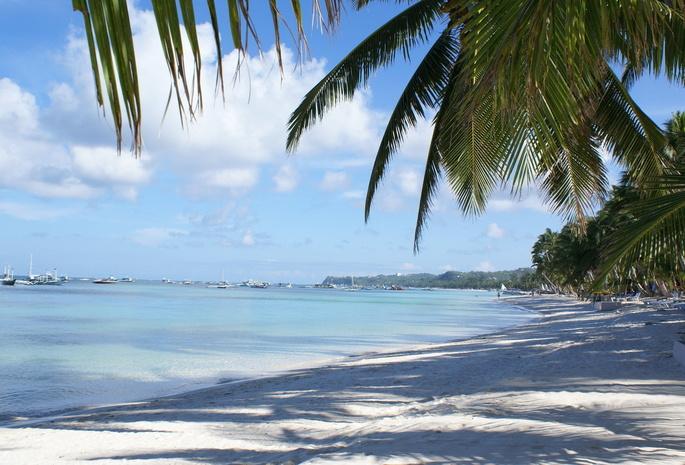 Река пальма море пейзаж природа