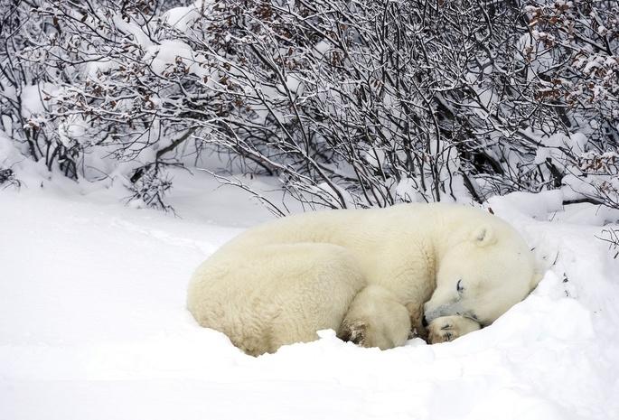 789 лес 848 зима 694 белый медведь