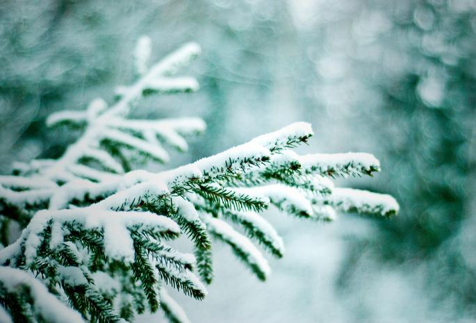 Боке природа ветки снег зима елки
