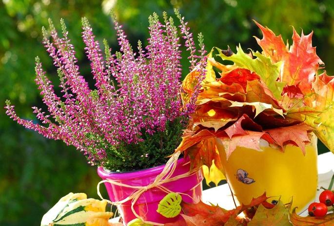 картинки цветы осени: