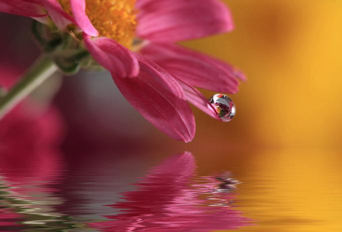 Цветы и вода картинки