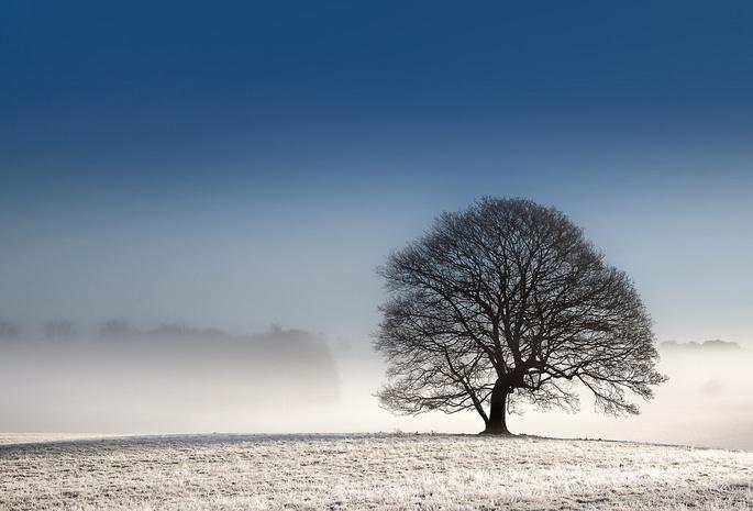 Обои поле пейзаж дерево для рабочего
