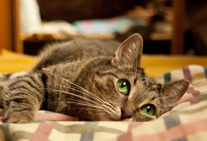 Коты на кровати рисунок