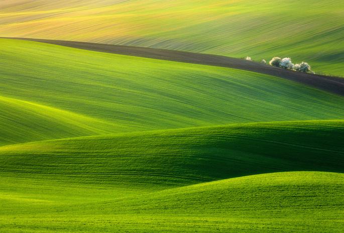 Обои луг, трава, деревья, природа, солнце, скачать обои, фото и ... | 465x685