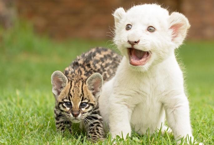 Фото диких котят