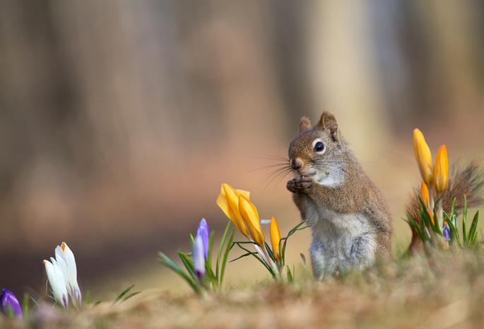 Картинки белка весной