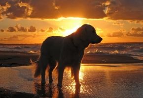 небо, закат, вода, море, Собака