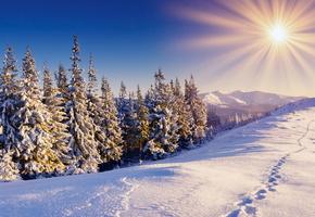 следы, пейзаж, заснежено, снег, солнце, ели, зима