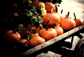 fall, cart, Pumpkins, orange, autumn