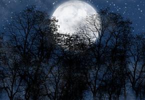 луна, лес, Ночь, звезды.небо