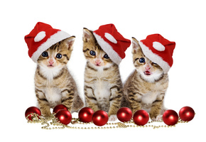 cats, Christmas balls, red balls, sweet, merry christmas, hat, beauty, magic, beautiful, pretty